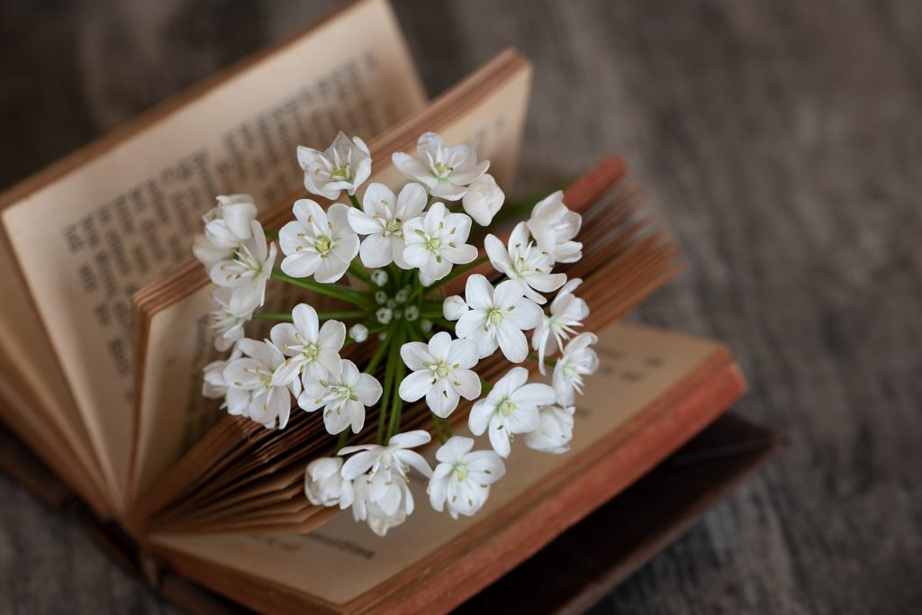 book, blossom, bloom