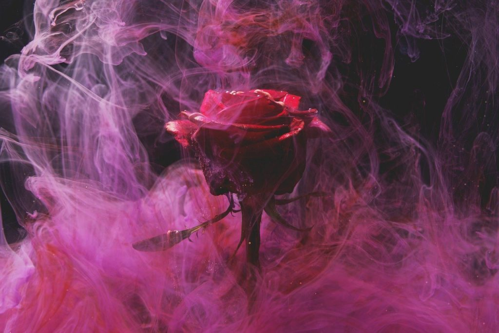 rose, red, smoke